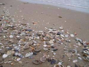 Reciclaje conchas moluscos