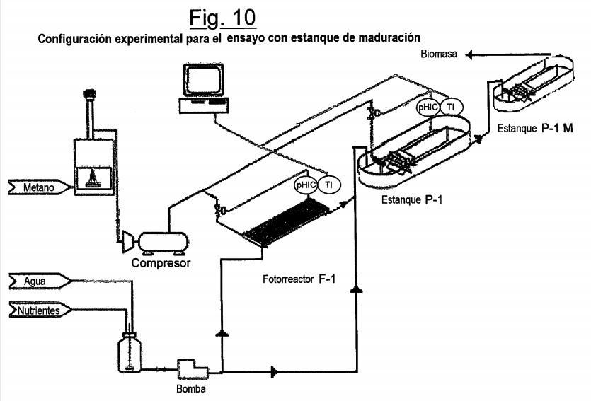 Biomasa - Algas y microalgas